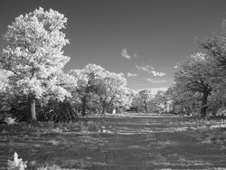 Near-infrared Photography